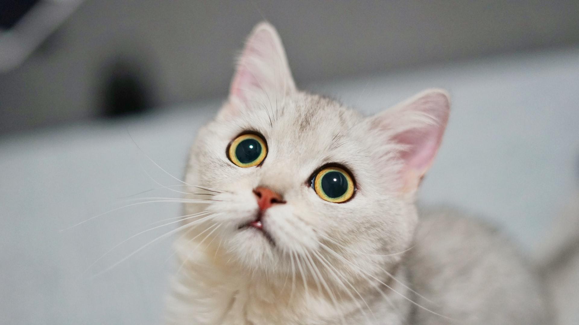 Lungenwürmer bei Katzen: Symptome und Behandlung