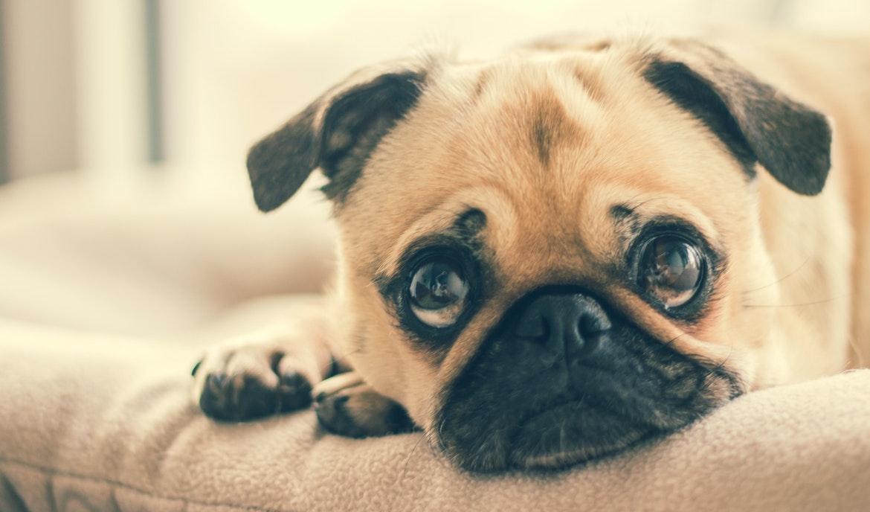 Blut im Stuhl beim Hund: Ursachen und Behandlung