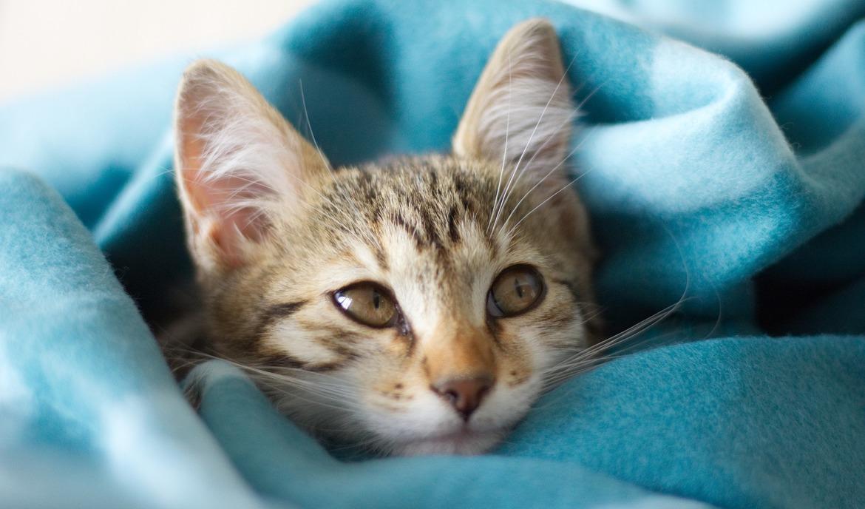 Katzenschnupfen Ursachen, Symptome und Behandlungsmaßnahmen