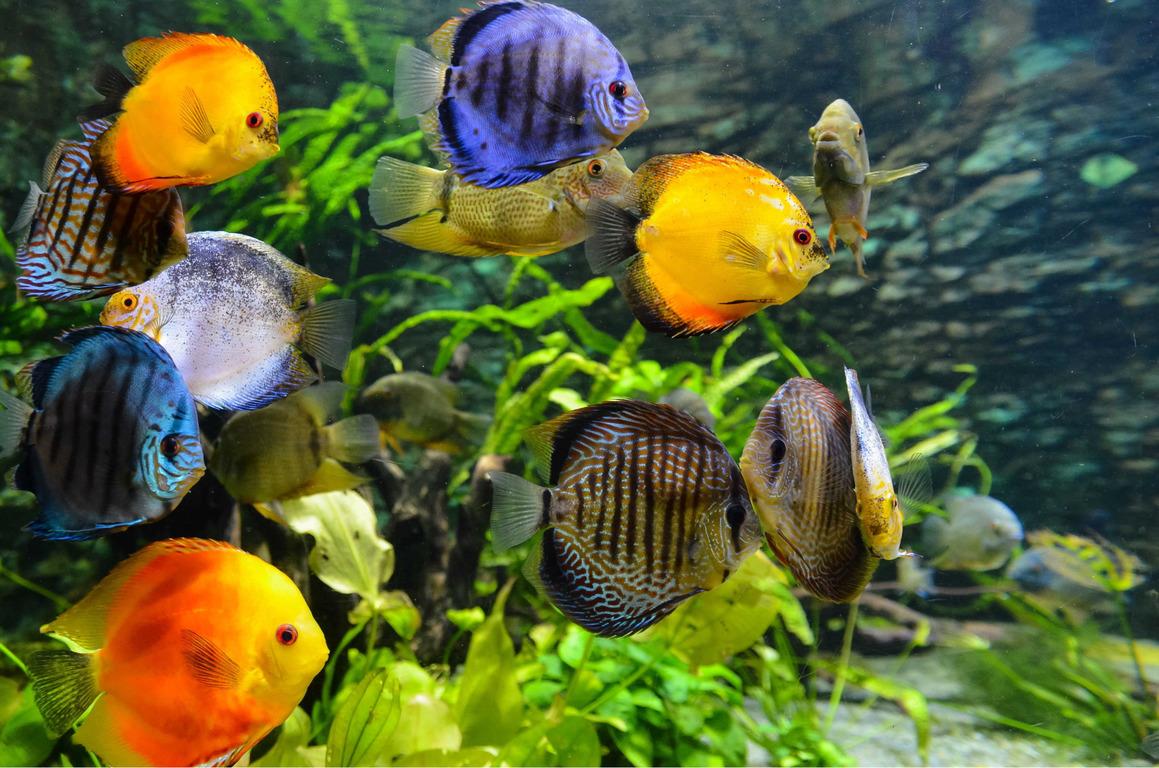 Aquariumfische für Anfänger: Arten und Tipps für die Haltung