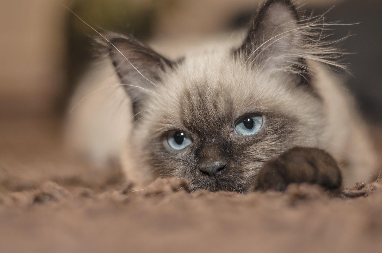 Entwurmungsmittel für Katzen: Tipps gegen die lästigen Parasiten