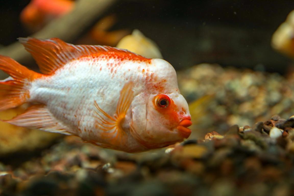 Flossenfäule beim Fisch: Ursachen, Symptome und Behandlung