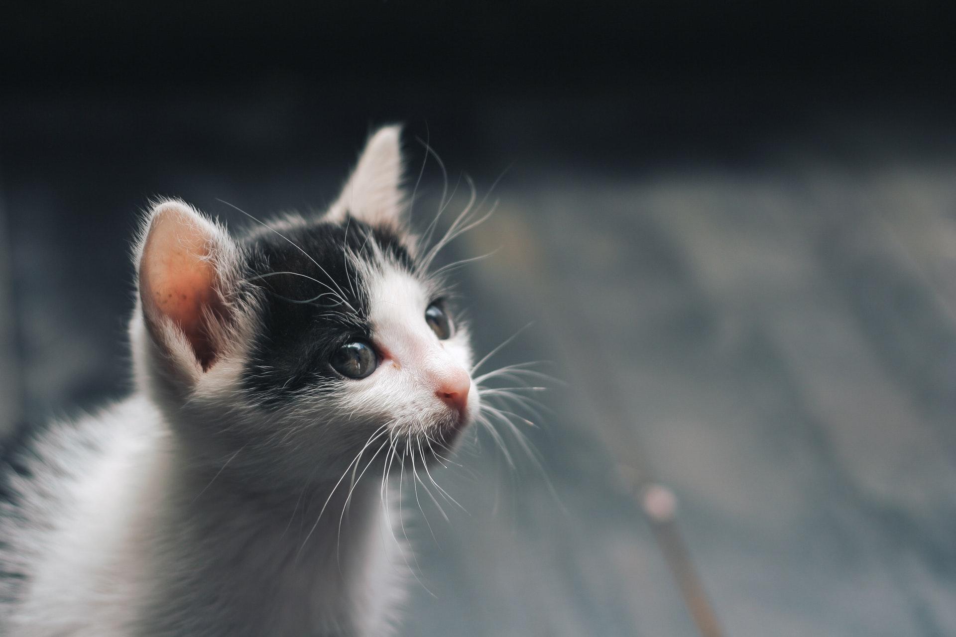 Katze alleine halten: Probleme und Tipps