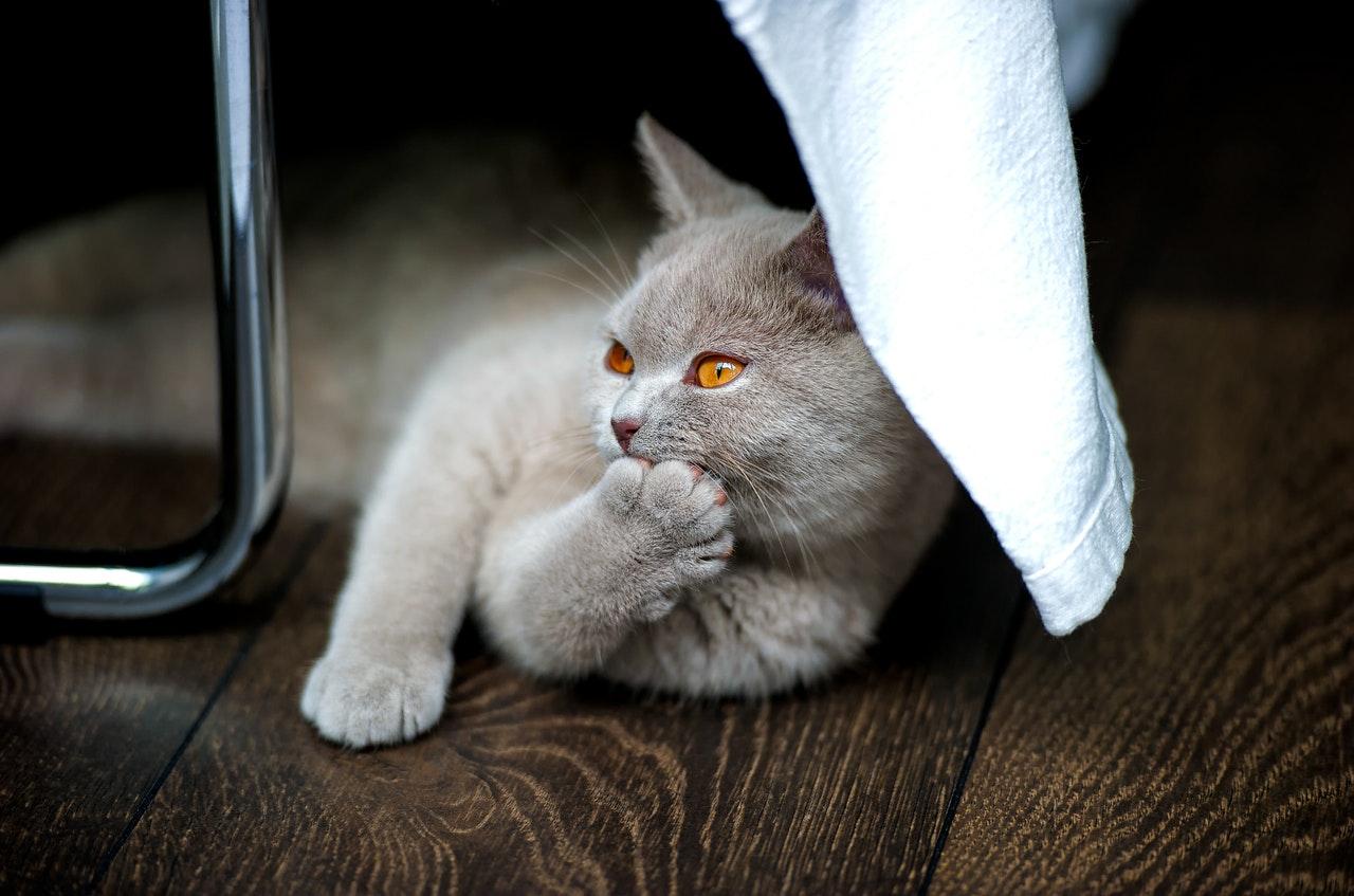 Katze beißt: Ursachen und Tipps