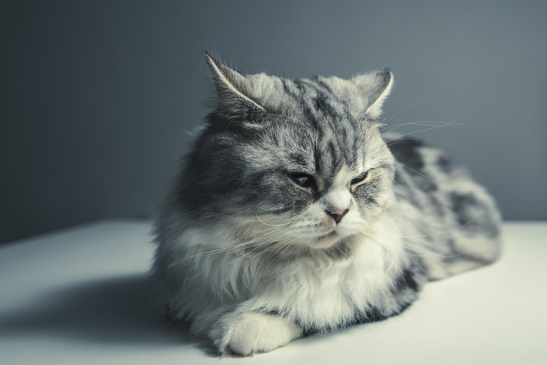 Katze chippen: das sollten Katzenhalter wissen