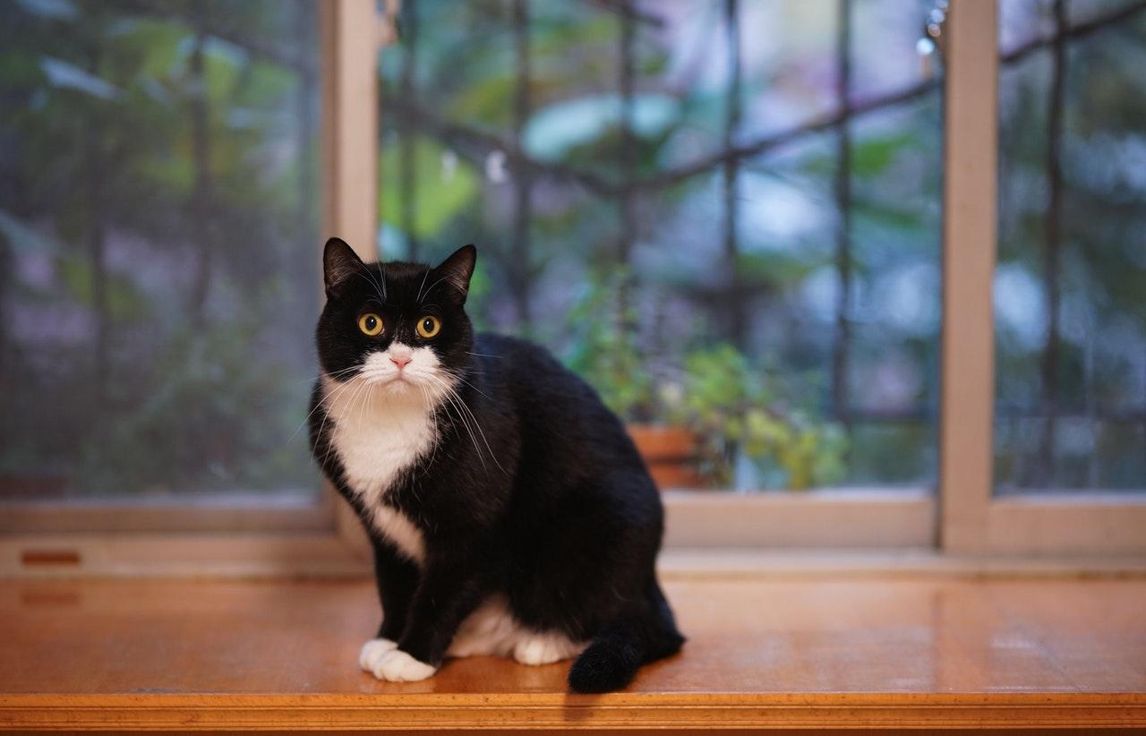 Katze eingewöhnen: so findet sich Ihr Vierbeiner schnell zurecht