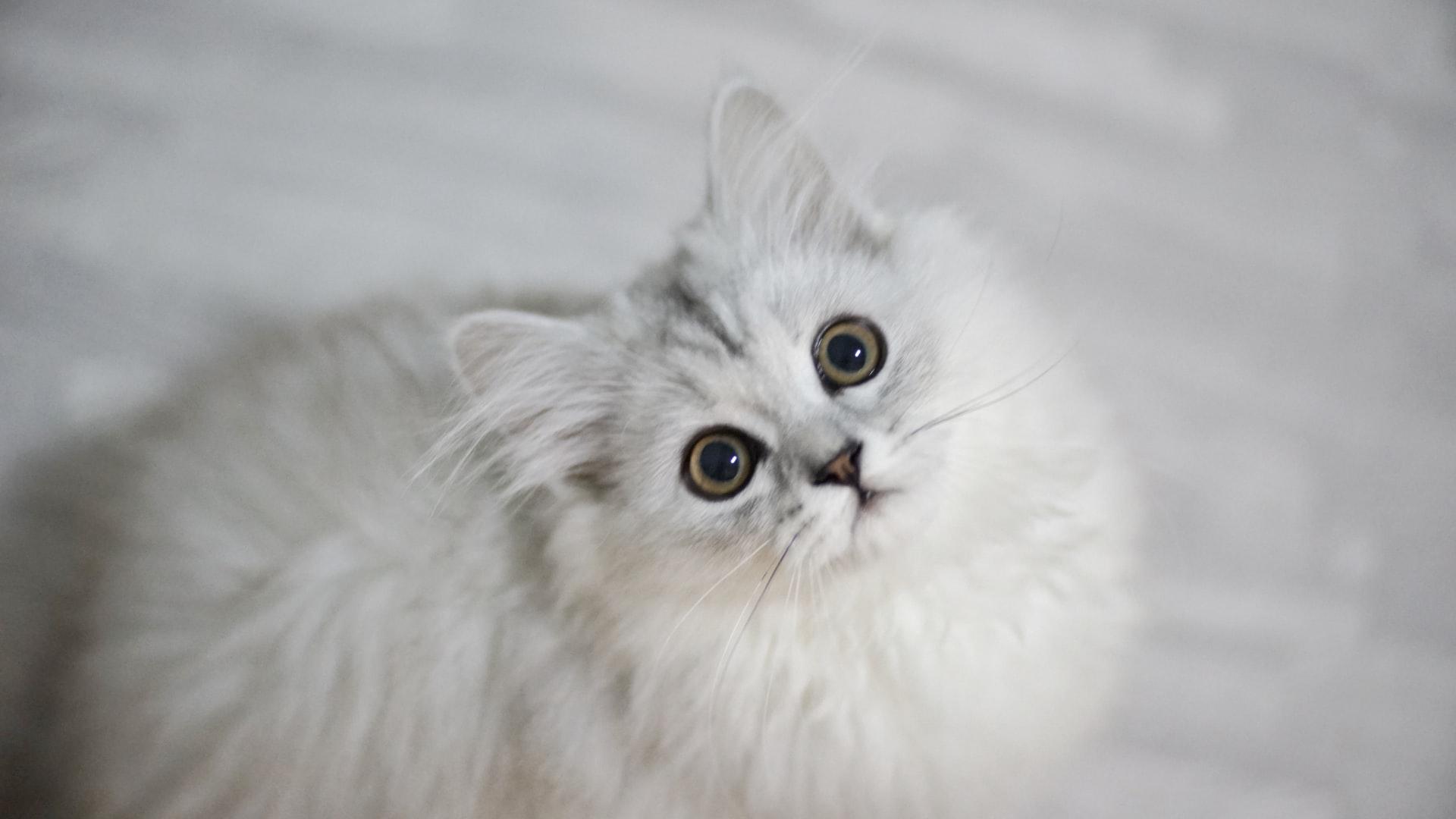 Katze pinkelt ins Bett: mögliche Ursachen und Tipps für Katzenhalter