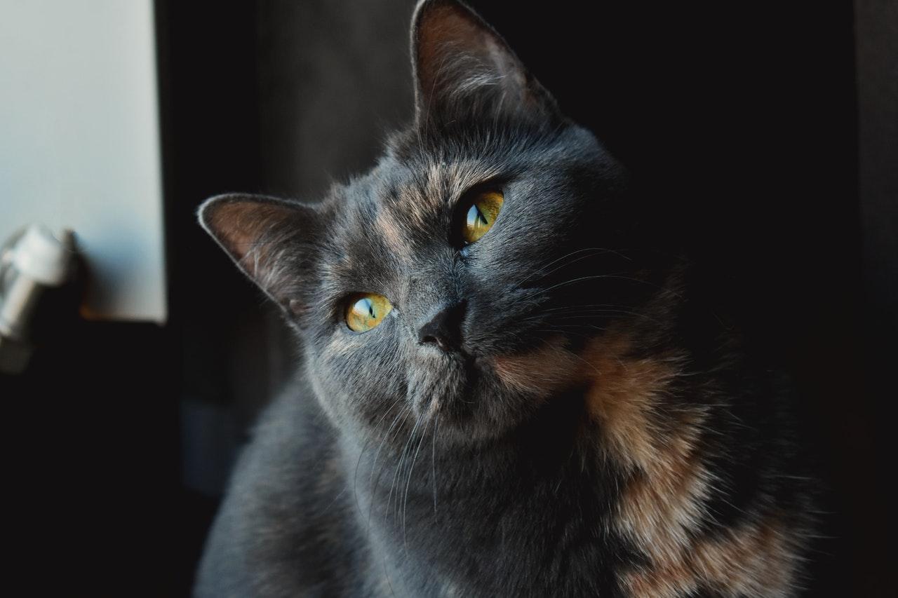 Katzensprache: können Katzen reden?