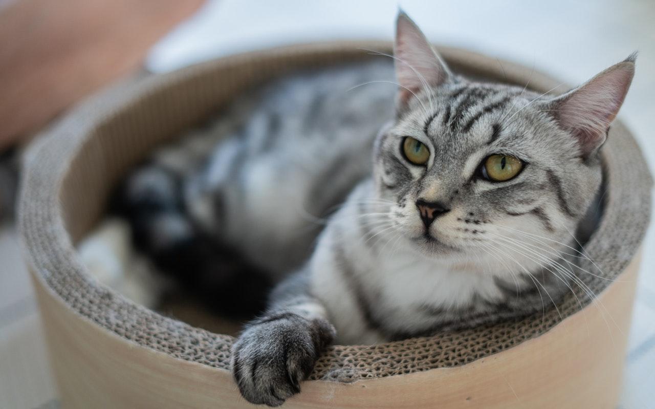 Caisse de transport pour chats : conseils pour l'achat et l'acclimatation
