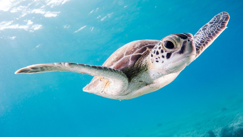 Wasserschildkröten: Haltung, Pflege und Futter