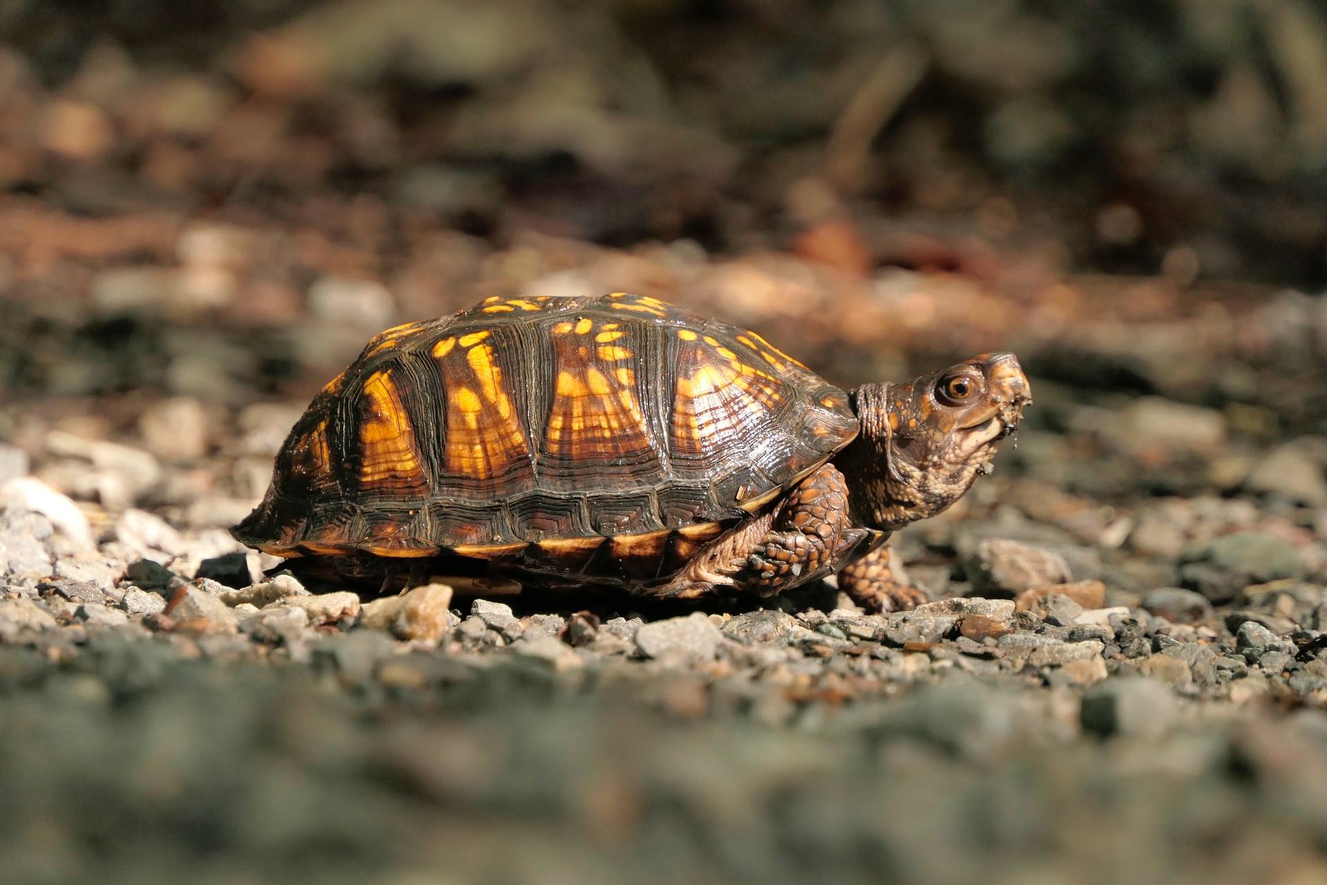 Wie alt werden Schildkröten?