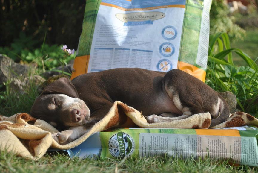 Sustainable pet food in premium quality